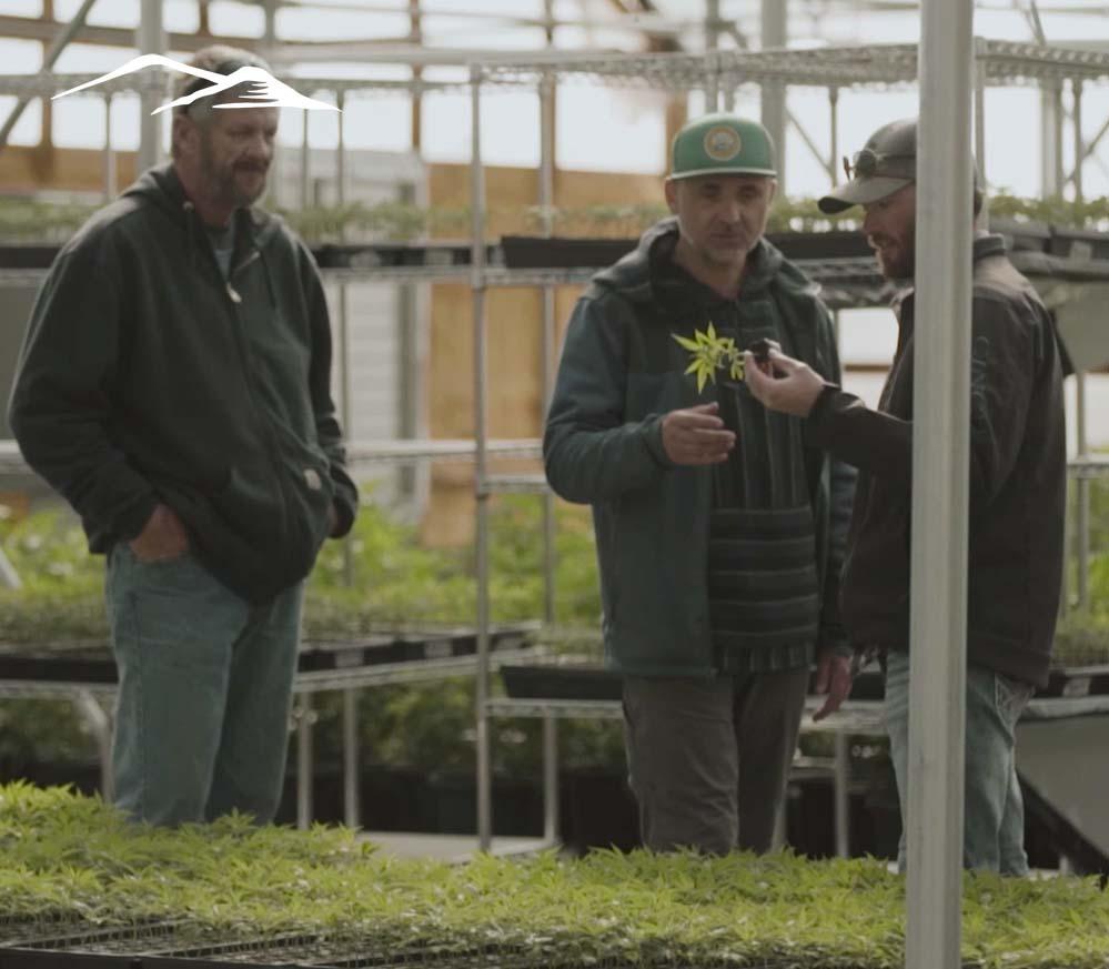 about_bomar_hemp_greenhouse_colorado_02
